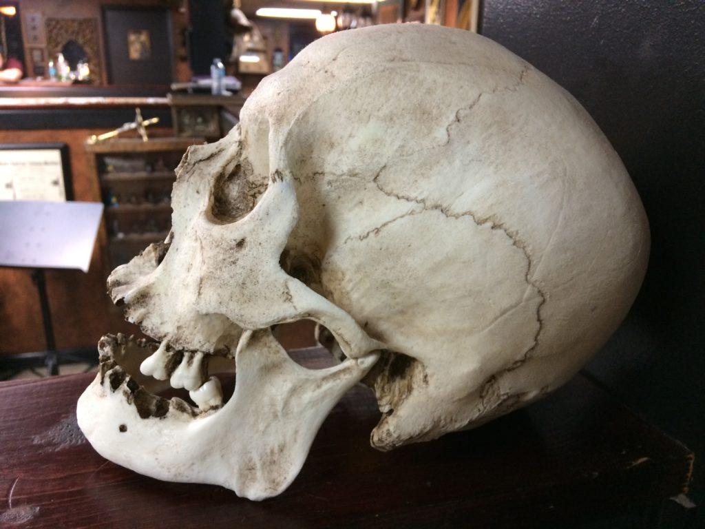 Cuántos huesos tiene el cuerpo humano - QueCuriosidades.com