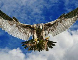 Aves peligrosas